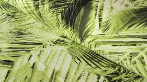 Acheter Jersey en coton imprimé vert kiwi: feuilles de palmier Tim - 160 cm dans la mercerie Makerist