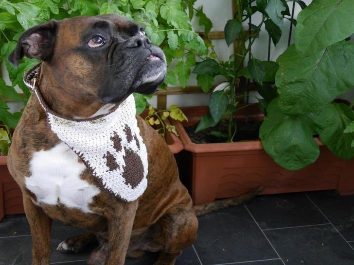 Hundehalstuch unisize  Dog Style No.6 - Häkelanleitungen bei Makerist sofort runterladen