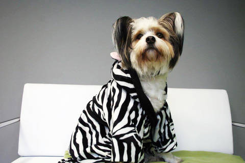 "Hundebademantel ""FREYA"" eBook Schnittmuster mit Tutorial bei Makerist sofort runterladen"