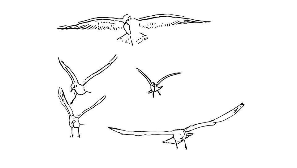 Plotterdatei > Möwen fliegend < Plottermotiv - Plotterdateien bei Makerist sofort runterladen