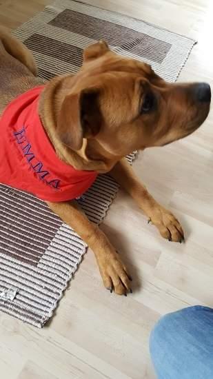Makerist - Hundehalstuch für Emma - 1