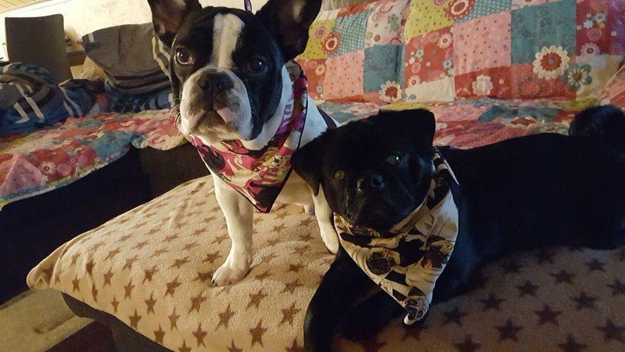 Makerist - Zwei Halstücher für meine beiden Enkel-Hunde Mats und Barney - Nähprojekte - 1