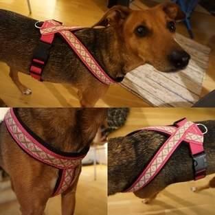 Makerist - Hundegeschirr aus Neopren - 1