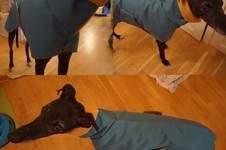 Makerist - Regenmantel für Windhunde - 1