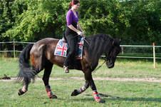Makerist - Set für mein Pferd - 1