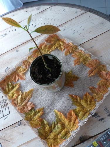Makerist - Napperon en jute et feuilles - Créations de couture - 1