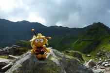 Makerist - MayBee, die etwas andere Biene mit Schachenmayr Bravo Wolle - 1