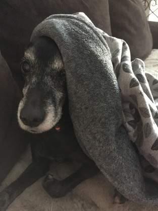 Makerist - Kuschelsack für Hunde - 1