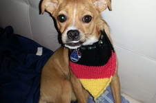 Makerist - mein hund dana ist schon in WM stimmung - 1