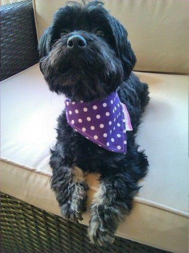 Makerist - Halstuch für kleinen Hund - Nähprojekte - 1