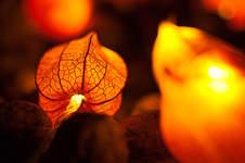Makerist - Es wird herbstlich: Lampion-Lichterkette mit Physalisblüten - 1